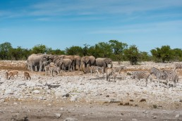 A crowd gathering at a waterhole in Etosha National Park, Namibia.