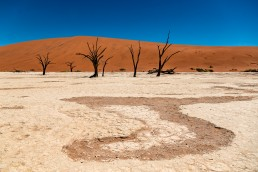 The surreal landscape of the Deadvlei in Sossusvlei desert, Namibia.
